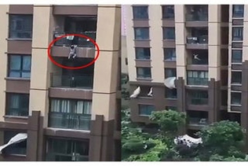 Toddler survives fall from sixth floor of building