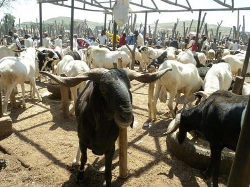 Eid-el Kabir: Police Beef Up Security, Ram Sellers Decry Low Patronage