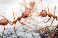 All the ants are in the world weigh as much as all humans