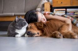 New zealanders have more pets per household than any other country