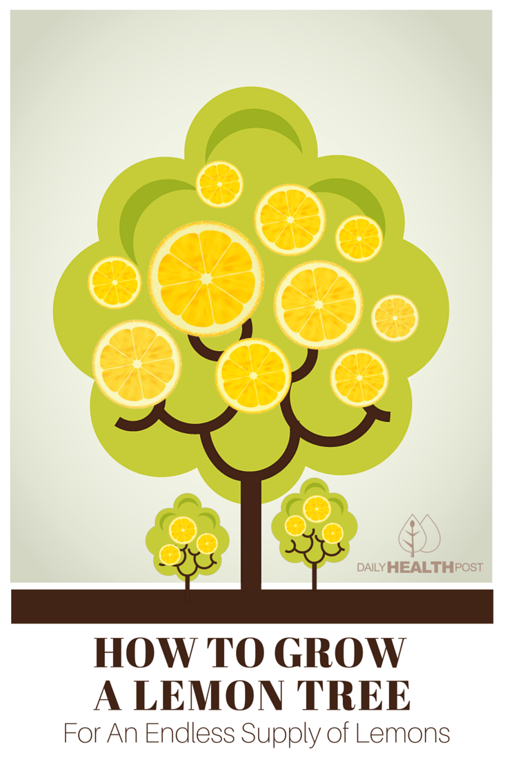 How-to-Grow-a-Lemon-Tree-For-An-Endless-Supply-of-Lemons-PIN.png